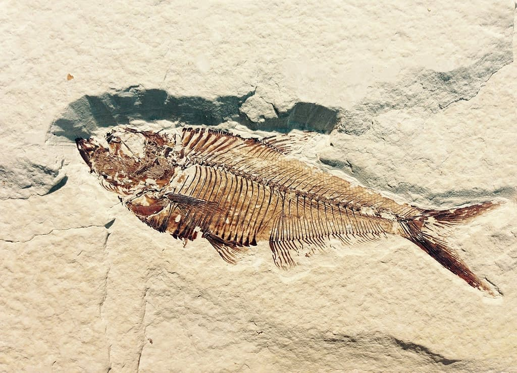 fossil, petrification, stone